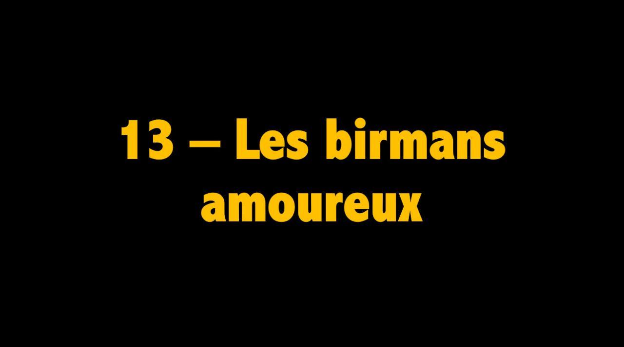 13 Les birmans amoureux